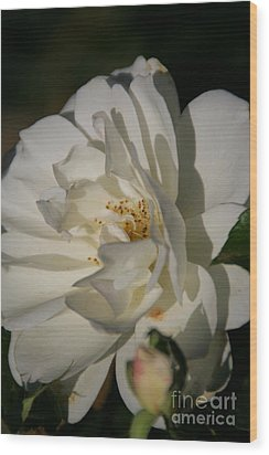 White Rose Wood Print by Andrea Jean