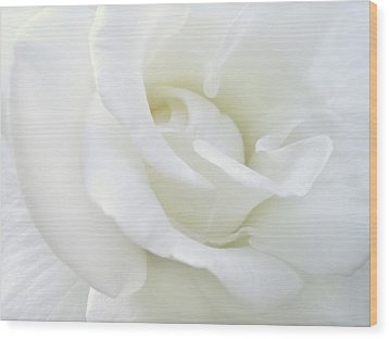 White Rose Angel Wings Wood Print by Jennie Marie Schell
