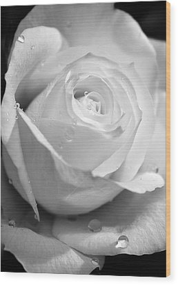 White Rose Wood Print by Brian Roscorla