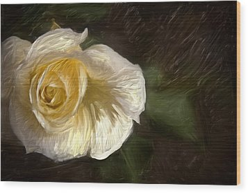 White Rose Wood Print by Graham Hughes