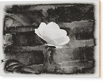 White Rose In Black And White Wood Print by Bill Cannon