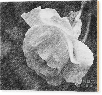 Wood Print featuring the drawing White Rose In Pencil by Smilin Eyes  Treasures