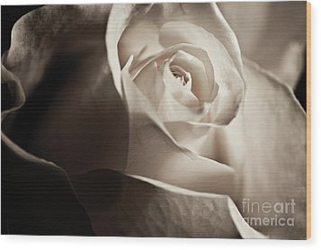 Wood Print featuring the photograph White Rose In Sepia 2 by Micah May