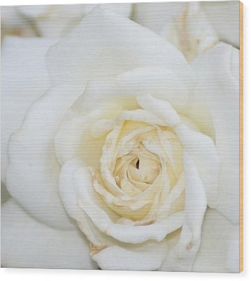 White Rose Wood Print by Liz Vernand