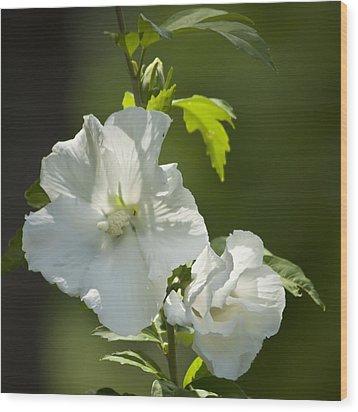 White Rose Of Sharon Squared Wood Print by Teresa Mucha