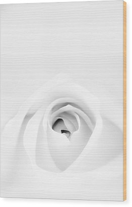 White Rose Wood Print by Scott Norris