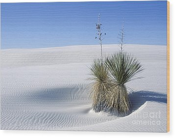 White Sands Dune And Yuccas Wood Print by Sandra Bronstein