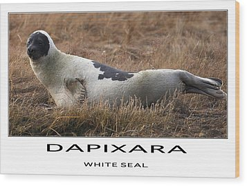 White Seal  Wood Print by Dapixara Art
