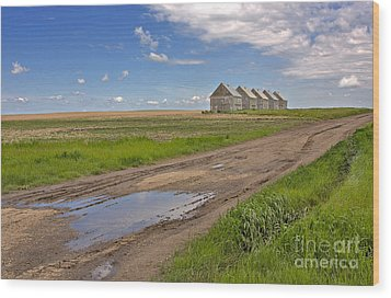 White Sheds On A Prairie Farm In Spring Wood Print by Louise Heusinkveld