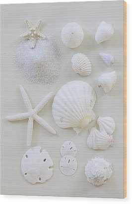 White Shells Wood Print by Daniel Hurst Photography