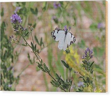 White-skipper On Lupine Wood Print