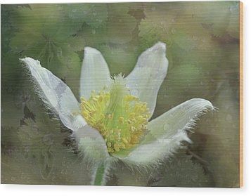 White Spring Flower With Leaves Texture Wood Print