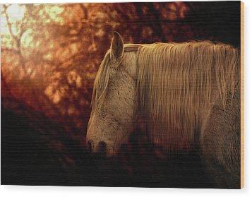 White Stallion Wood Print