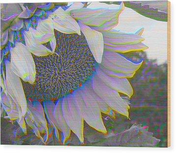 White Sunflower Wood Print by Vicky Brago-Mitchell