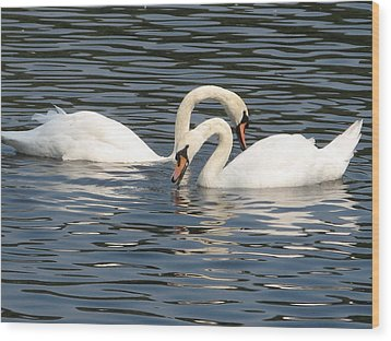 White Swans Wood Print by Joyce Woodhouse