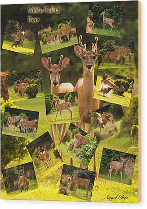 Wood Print featuring the photograph White-tailed Collage by Angel Cher