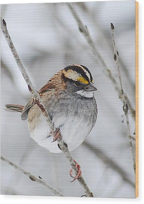 White Throated Sparrow Wood Print