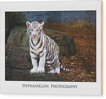 White Tiger Cub Wood Print by Stephanie Hayes