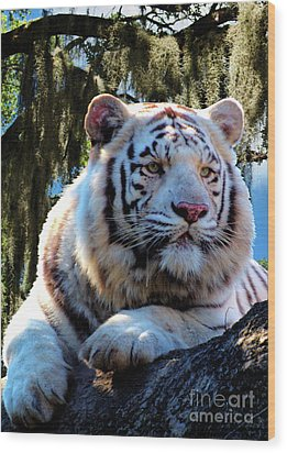 Wood Print featuring the photograph White Tiger  by Ken Frischkorn