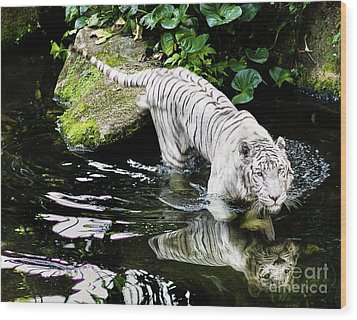 White Tiger Wood Print by M G Whittingham