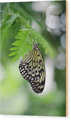 White Tree Nymph Butterfly 2 Wood Print
