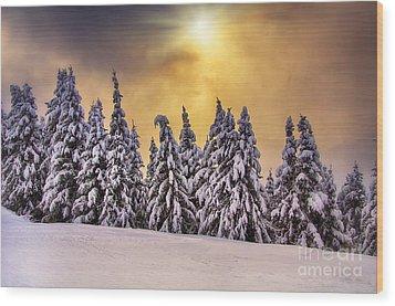 White Trees Wood Print by Alessandro Giorgi Art Photography