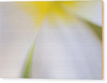 White Tulip Detail Wood Print by Silke Magino