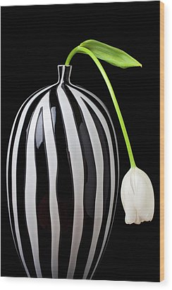 White Tulip In Striped Vase Wood Print by Garry Gay