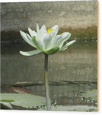 Wood Print featuring the photograph White Water Lily 2 by Randall Weidner