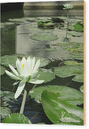 Wood Print featuring the photograph White Water Lily 3 by Randall Weidner