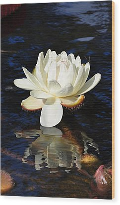 White Water Lily Wood Print by Andrea Everhard