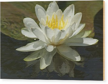 White Water Lily Wood Print by Ron Read
