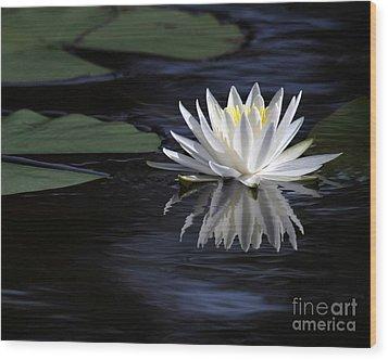 White Water Lily Wood Print by Sabrina L Ryan