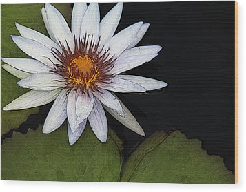White Water Lily Wood Print by Yvonne Wright