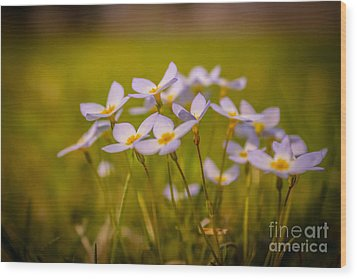 White Wild Flowers - Close Up Wood Print