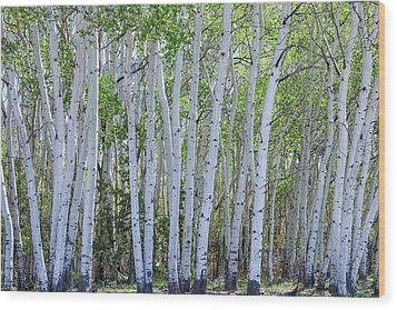 White Wilderness Wood Print by James BO Insogna