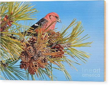 Wood Print featuring the photograph White-winged Crossbill by Debbie Stahre