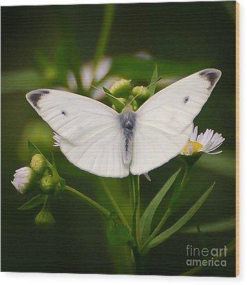 White Wings Of Wonder Wood Print