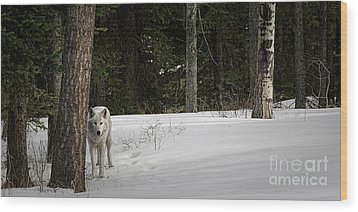 White Wolf Wood Print by Brad Allen Fine Art