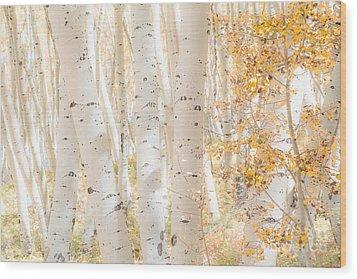 White Woods Wood Print