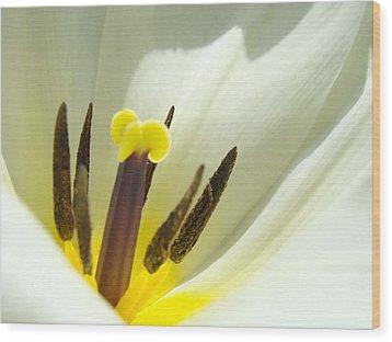 White Yellow Tulip Flower Fine Art Prints Wood Print by Baslee Troutman