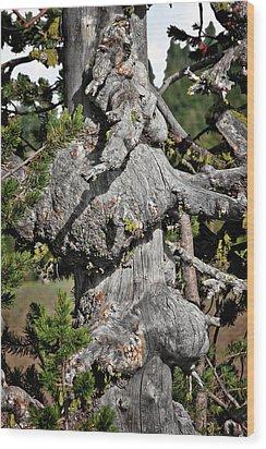 Whitebark Pine Tree - Iconic Endangered Keystone Species Wood Print by Christine Till