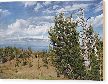 Whitebark Pine Trees Overlooking Crater Lake - Oregon Wood Print by Christine Till