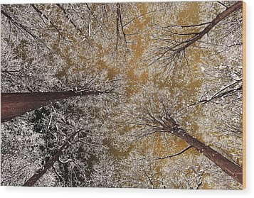 Wood Print featuring the photograph Whiteout by Tony Beck