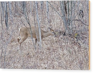 Wood Print featuring the photograph Whitetail Deer 1171 by Michael Peychich
