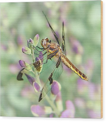 Wood Print featuring the photograph Whitetail Dragonfly On False Indigo 2 by Jim Hughes