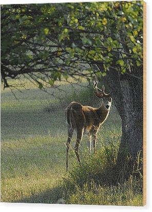 Whitetail Wood Print
