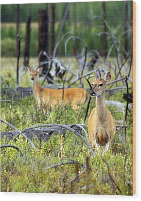 Whitetails Wood Print by Marty Koch