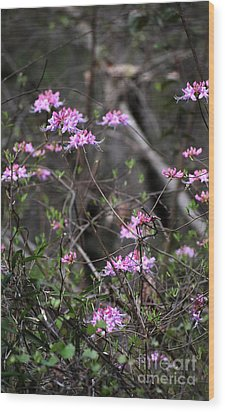 Wood Print featuring the photograph Who Put The Wild In Wildflowers by Skip Willits