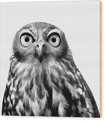 Whoo You Callin A Wise Guy Wood Print by Marion Cullen